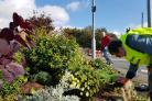Rawdon in Bloom volunteers were doing winter planting