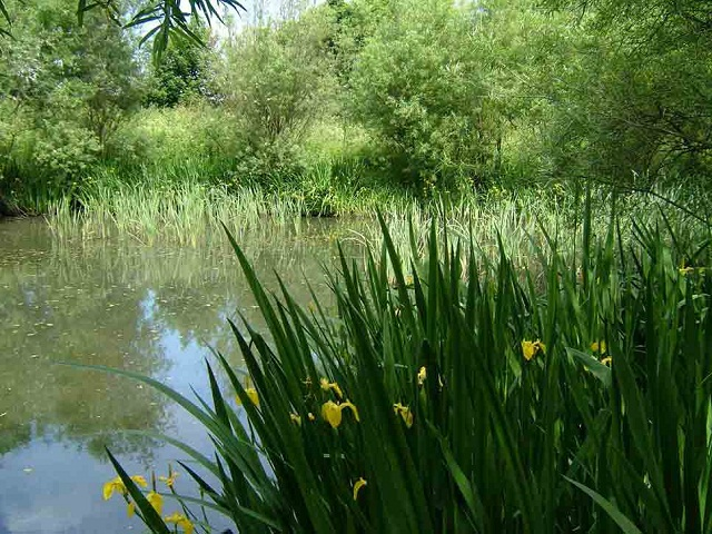 Wildlife pond at Gallows Hill off Pool Road, Otley