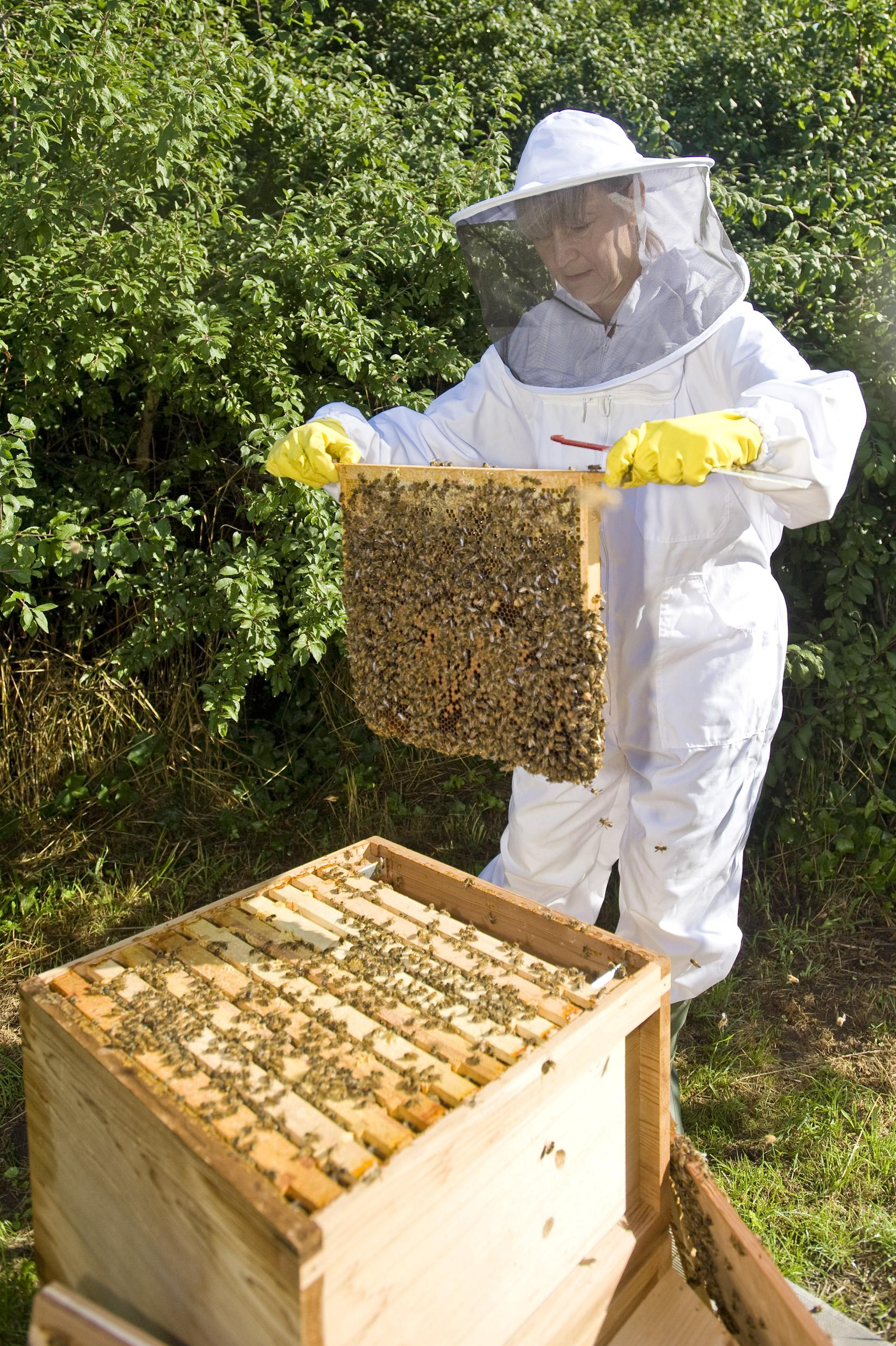 Washburn Heritage Centre to hold beekeeping work