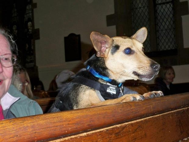 Wharfedale Observer: A dog at the church service