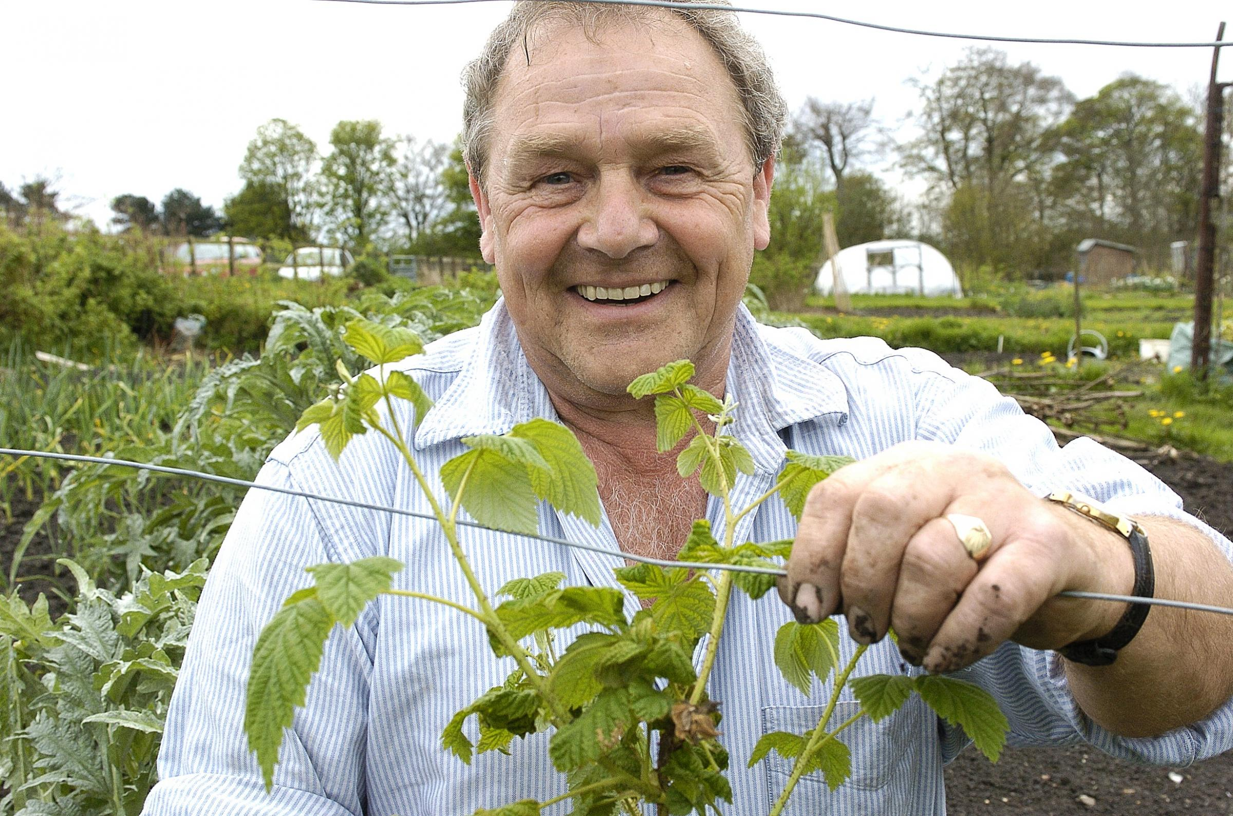 Phil Gomersall tends to an allotment