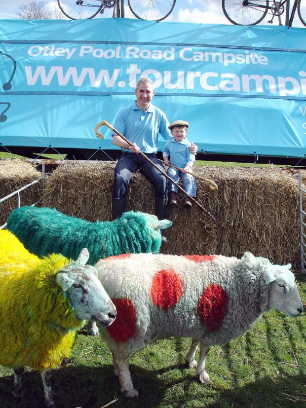 Wharfedale Observer: MP Greg Mulholland with three-year-old Alfie Asquith and some Tour de France-themed sheep where the campsite will be when the race comes