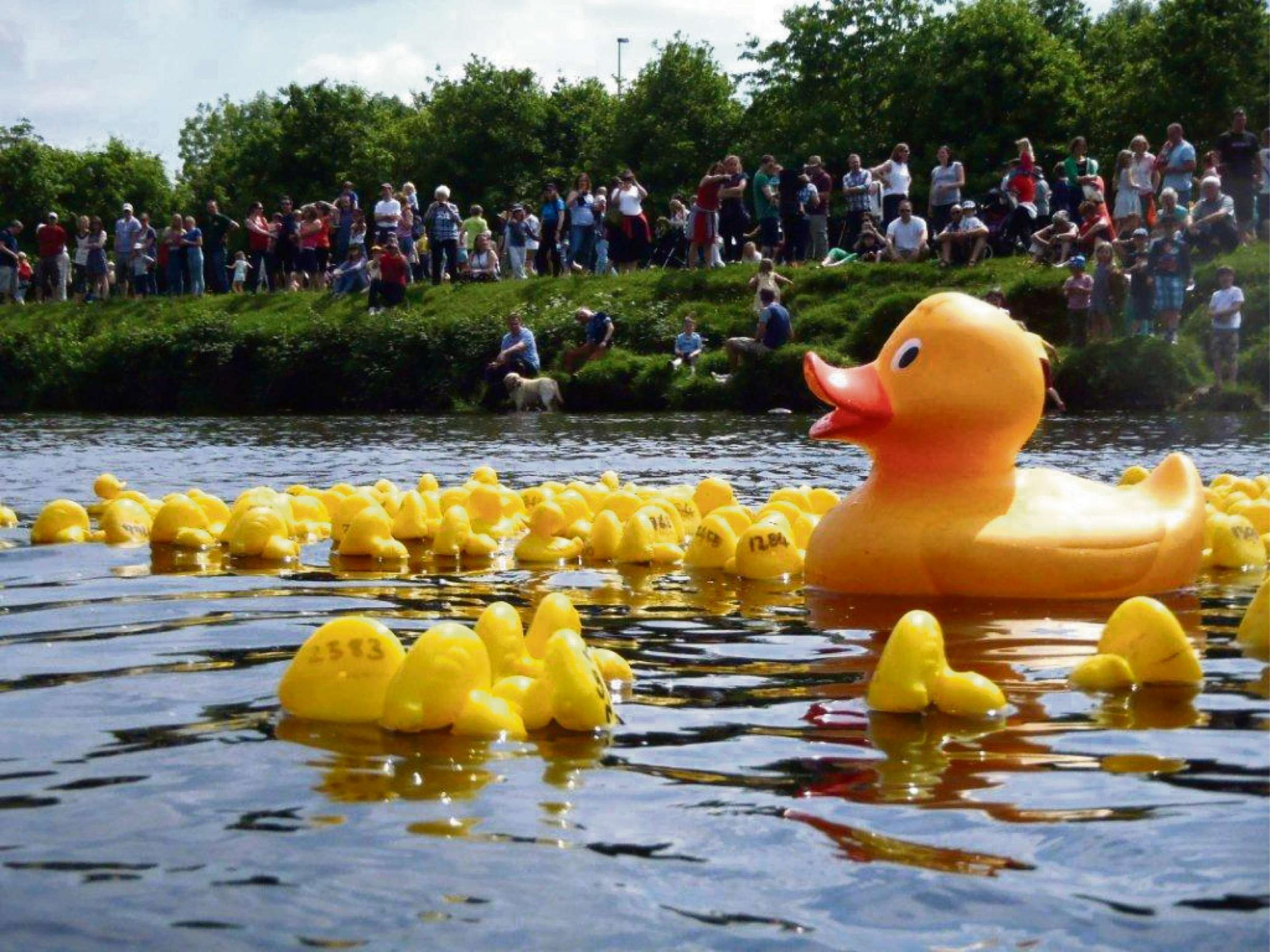 Ducks race for a record