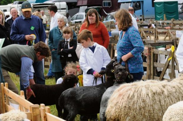 Visitors enjoying the sheep at last year's Arthington Show.
