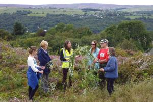 Moorland plants put to good use