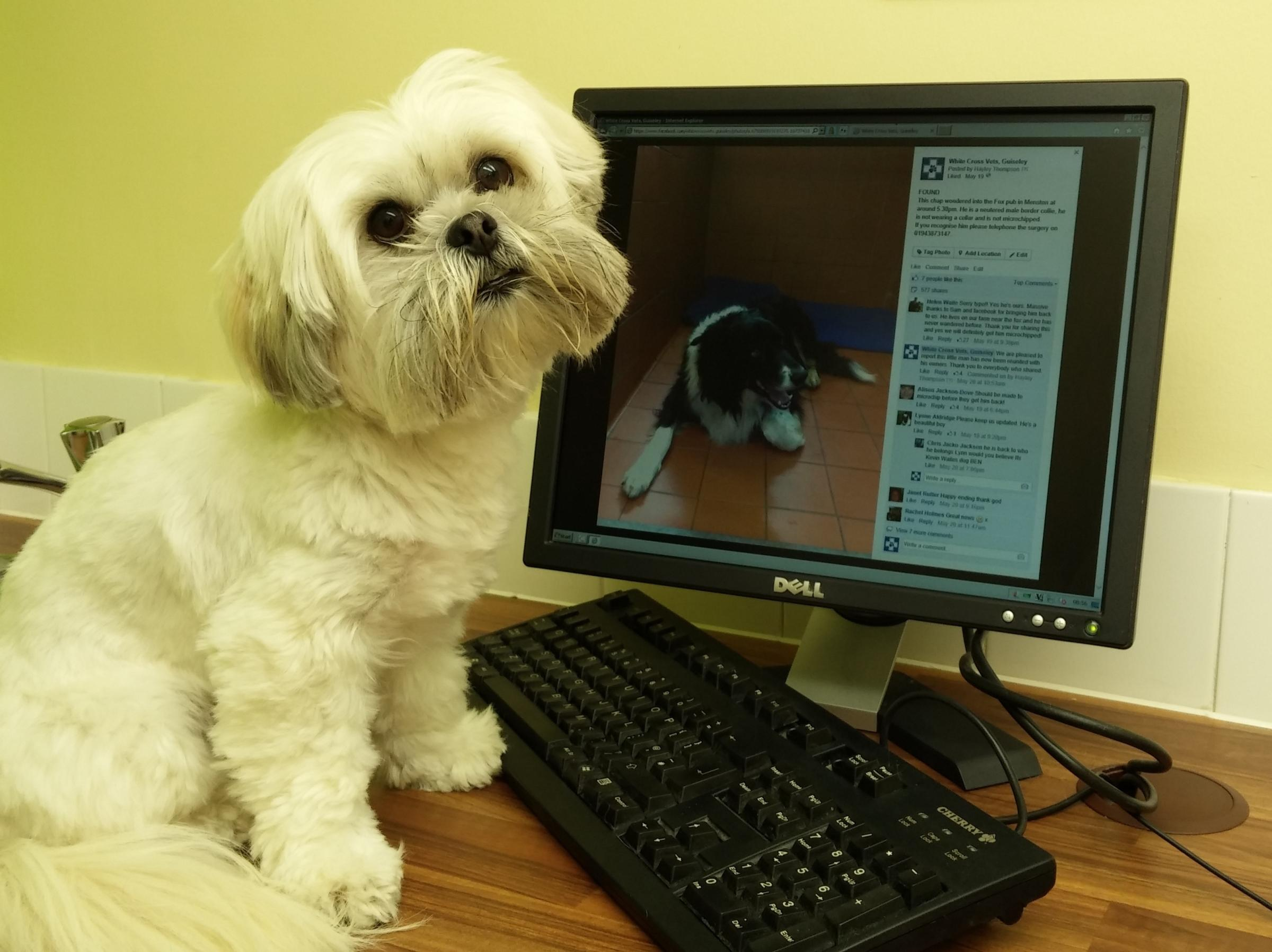 New research has shown that 75 per cent of owners are now using the Internet to check their pet's symptoms